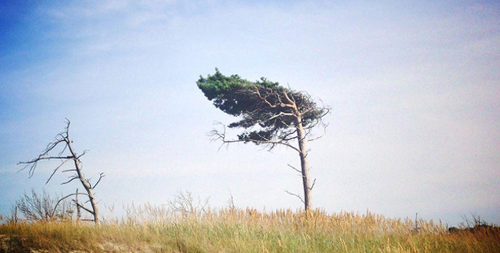 Weststrand Windflüchter - weltvermessen.de
