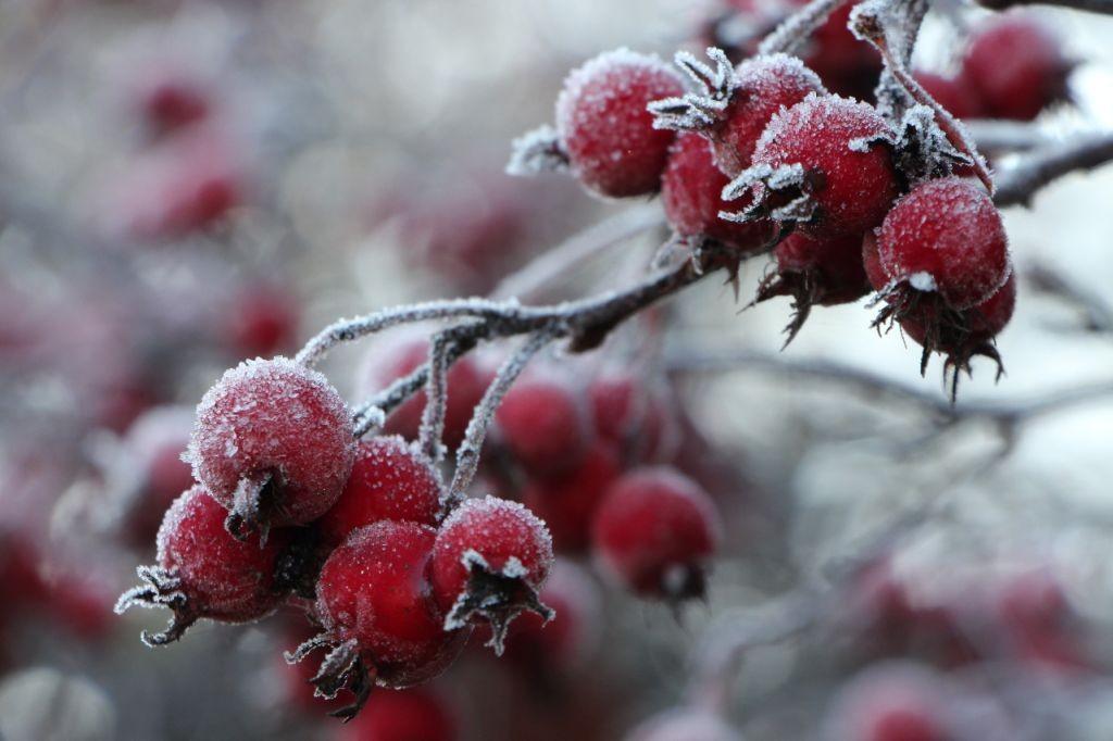 Winter im Westfalenpark